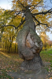 DISEASED-TREE-dreamstime_xs_21744936