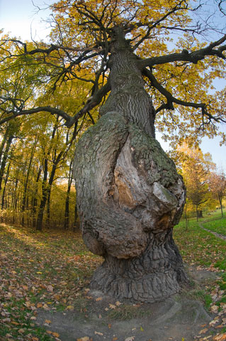 DISEASED-TREE-dreamstime_xs_21744936