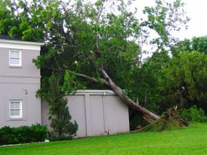 ETS.tree-on-house-640