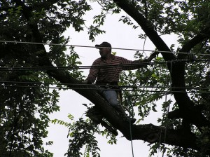 TREE-REMOVAL.P10102104