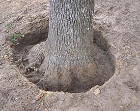Tree-Base-Work285